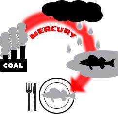 Mercury-cycle