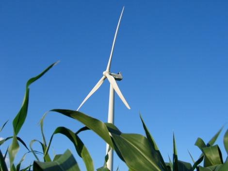 wind_turbine_cc_license-_scelis-718556062_6c6555a656_o-scaled1000