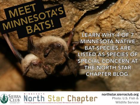 photo hook - bats (1)