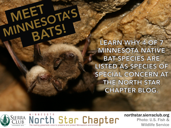 North Star Critter Spotlight: Bats!