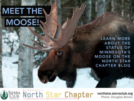 photo hook - moose