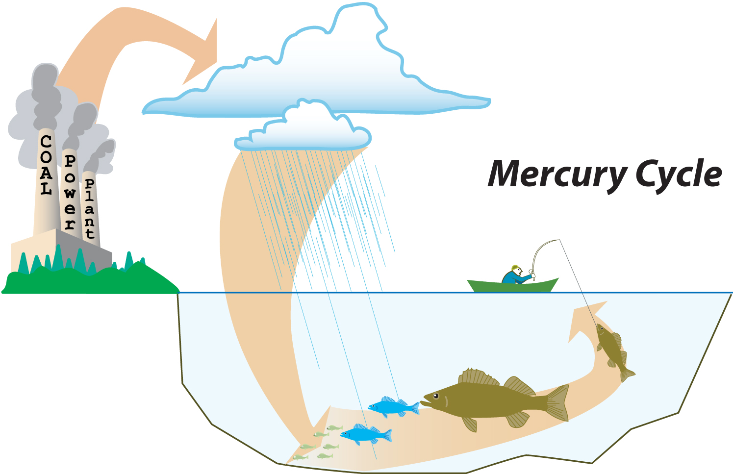 The decline of mercury contamination new study brings for Mercury poisoning fish