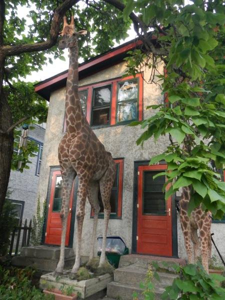 Giraffe in Northeast Minneapolis