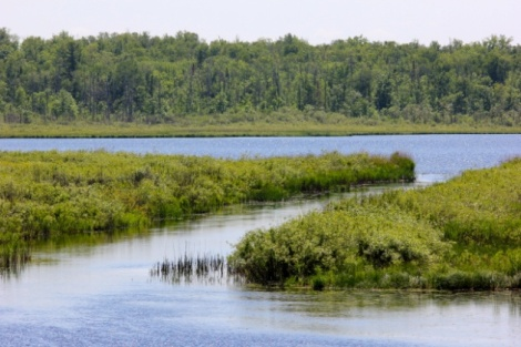 wetlands - photo credit: Ivy Vaino
