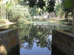 Ruhel's family fish pond